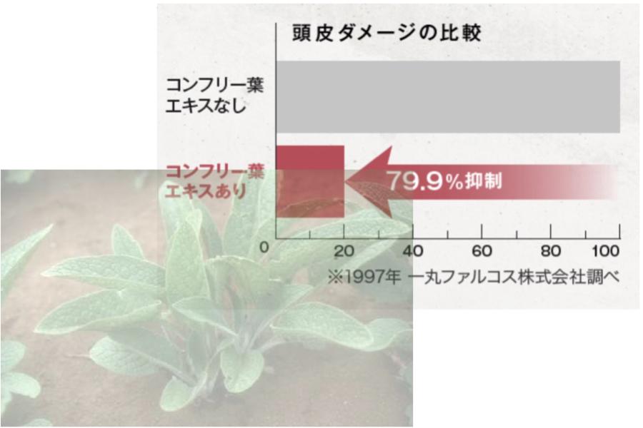 コンフリー葉